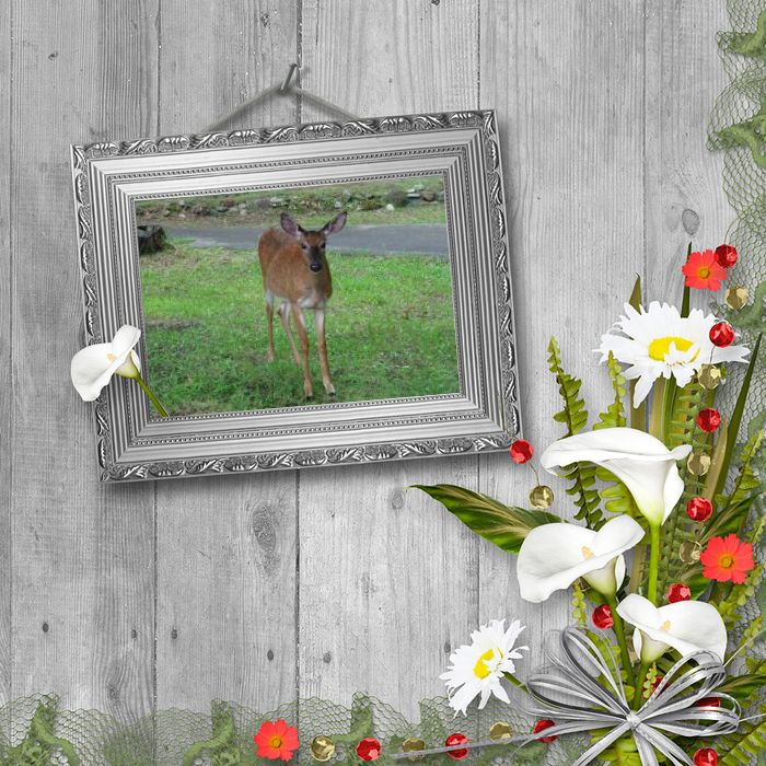 fait avec https://pipcamera.net/nature/wall-mounted-photo-frame-244.html