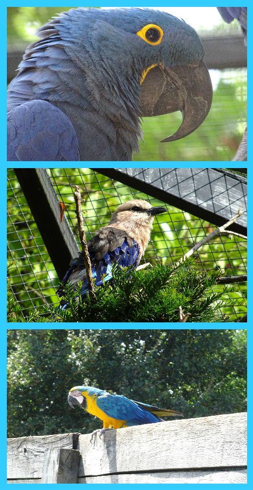 Image du Blog coquelikoaumarineland2009.centerblog.net
