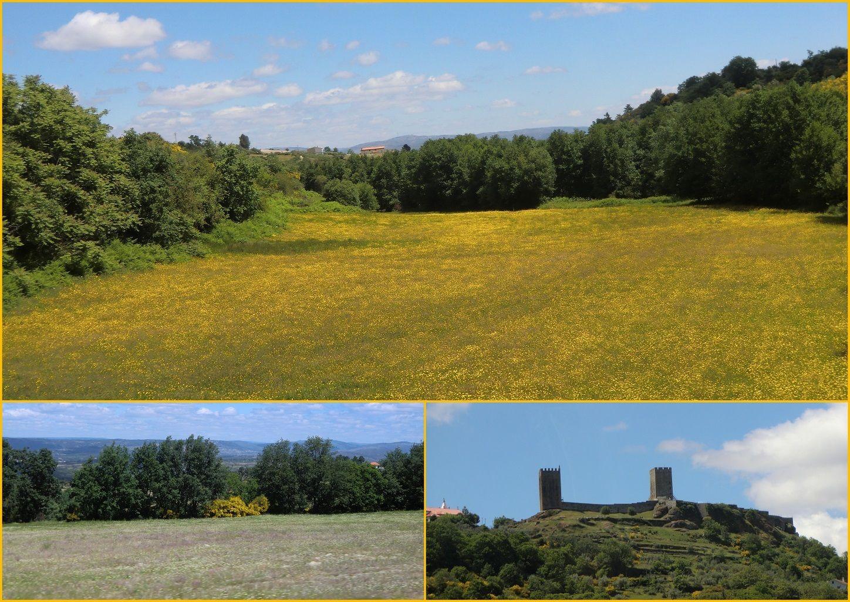 http://coquelikoaumarineland2009.c.o.pic.centerblog.net/o/fc0ec985.jpg